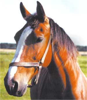 Animale Calul modul de viata si caracteristicile lui animal .com .ro