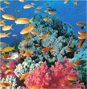 Animale Coralul modul de viata si caracteristicile lui animal .com .ro