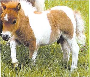 Animale Poneiul modul de viata si caracteristicile lui animal .com .ro