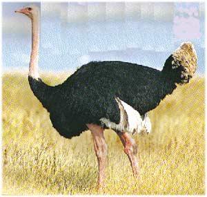 Animale Strutul modul de viata si caracteristicile lui animal .com .ro