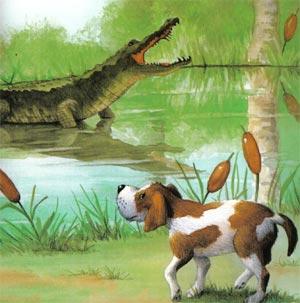 Animale Câinele si crocodilul modul de viata si caracteristicile lui animal .com .ro