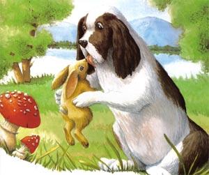 Animale Cainele si iepurele modul de viata si caracteristicile lui animal .com .ro