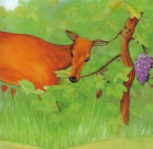 Animale Caprioara si vita de vie modul de viata si caracteristicile lui animal .com .ro