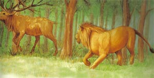 Animale Cerbul, izvorul si leul modul de viata si caracteristicile lui animal .com .ro