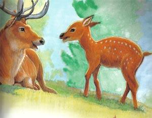 Animale Cerbul si puiul sau modul de viata si caracteristicile lui animal .com .ro