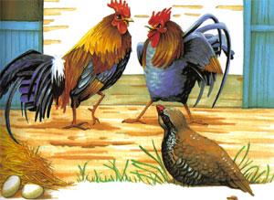 Animale Cocosii si potârnichea modul de viata si caracteristicile lui animal .com .ro