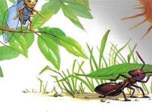 Animale Greierele si furnica modul de viata si caracteristicile lui animal .com .ro