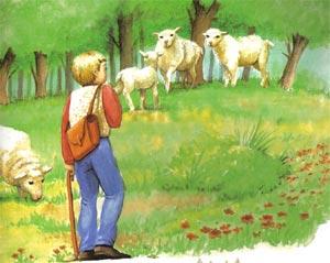 Animale Pastorul si leul modul de viata si caracteristicile lui animal .com .ro