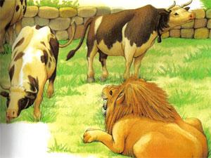 Animale Cei trei boi si leul modul de viata si caracteristicile lui animal .com .ro