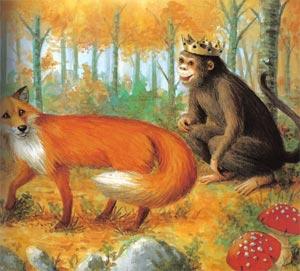 Animale Vulpea si maimuta aleasa regina modul de viata si caracteristicile lui animal .com .ro
