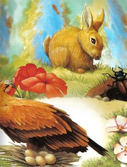 Animale Vulturul, iepurele si carabusul modul de viata si caracteristicile lui animal .com .ro