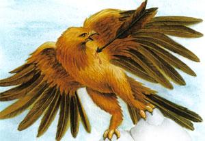 Animale Vulturul si sageata modul de viata si caracteristicile lui animal .com .ro